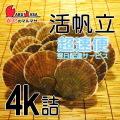 [かにのマルマサ] 活ほたて貝 4kg [16-24枚] 北海道産 活ホタテ [活帆立貝] 超速便 お取り寄せ ギフト