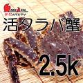 [かにのマルマサ]北海道産 [活]タラバ蟹[2.5kg前後 1尾] 活蟹専門店/たらば蟹お取り寄せ/贈り物 カニギフト