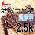 [かにのマルマサ]北海道産 [活]タラバ蟹[2.5kg前後 1尾] 活蟹専門店/たらば蟹お取り寄せ/超速便贈り物 カニギフト