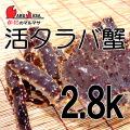 [かにのマルマサ]北海道産 [活]タラバ蟹[2.8kg前後 1尾] 活蟹専門店/たらば蟹お取り寄せ/贈り物 カニギフト