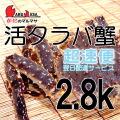 [かにのマルマサ]北海道産 [活]タラバ蟹[2.8kg前後 1尾] 活蟹専門店/たらば蟹お取り寄せ/超速便贈り物 カニギフト