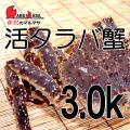 [かにのマルマサ]北海道産 [活]タラバ蟹[3.0kg前後 1尾] 活蟹専門店/たらば蟹お取り寄せ/贈り物 カニギフト