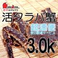 [かにのマルマサ]北海道産 [活]タラバ蟹[3.0kg前後 1尾] 活蟹専門店/たらば蟹お取り寄せ/超速便贈り物 カニギフト