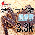 [かにのマルマサ]北海道産 [活]タラバ蟹[3.3kg前後 1尾] 活蟹専門店/たらば蟹お取り寄せ/超速便贈り物 カニギフト