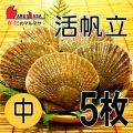 [かにのマルマサ] 活ほたて貝 [中] 5枚セット 北海道産 活ホタテ [活帆立貝] お取り寄せ ギフト