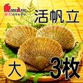 [かにのマルマサ]活ほたて貝 [大] 3枚セット 北海道産 活ホタテ[活帆立貝] お取り寄せ ギフト