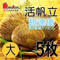 [かにのマルマサ] 活ほたて貝 [大] 5枚セット 北海道産 活ホタテ [活帆立貝] 超速便 贈り物 ギフト