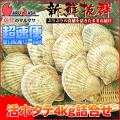 [かにのマルマサ]活ほたて貝4kg[16-24枚]北海道産 活ホタテ[活帆立貝] 超速便