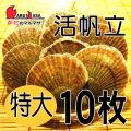[かにのマルマサ]活ほたて貝 [特大] 10枚セット 北海道産 活ホタテ[活帆立貝] お取り寄せ ギフト