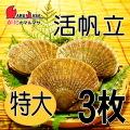 [かにのマルマサ]活ほたて貝 [特大] 3枚セット 北海道産 活ホタテ[活帆立貝] お取り寄せ ギフト