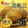 [かにのマルマサ]活ほたて貝 [特大] 5枚セット 北海道産 活ホタテ[活帆立貝] お取り寄せ ギフト