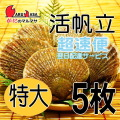 [かにのマルマサ]活ほたて貝 [特大] 5枚セット 北海道産 活ホタテ [活帆立貝] 超速便 贈り物 ギフト