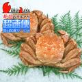 [かにのマルマサ]北海道産 [ボイル]毛がに[550g 2尾] 活毛蟹専門店/毛ガニお取り寄せ/超速便