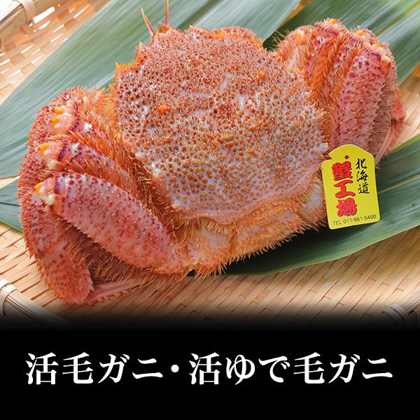 【送料無料!!】 北海道産 活ゆで毛ガニ300gUP位/5尾 大特価!!