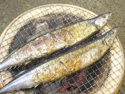 新物 (大)塩さんま5尾【北海道産】