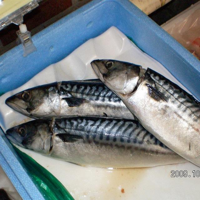 B636 塩さば(16尾サイズ)(サバ 鯖)