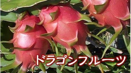 沖縄産 ドラゴンフルーツ