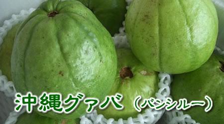 沖縄産 グァバ