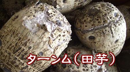 沖縄産 田芋(ターンム)