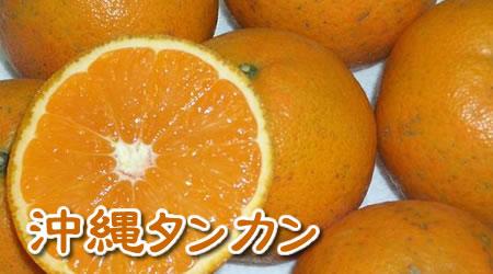 沖縄産 タンカン