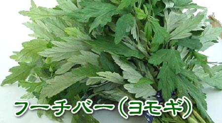 沖縄産 ヨモギ(フーチバー)