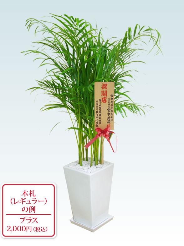 アレカヤシ(陶器鉢植込み、スクエアタイプ白色) 9