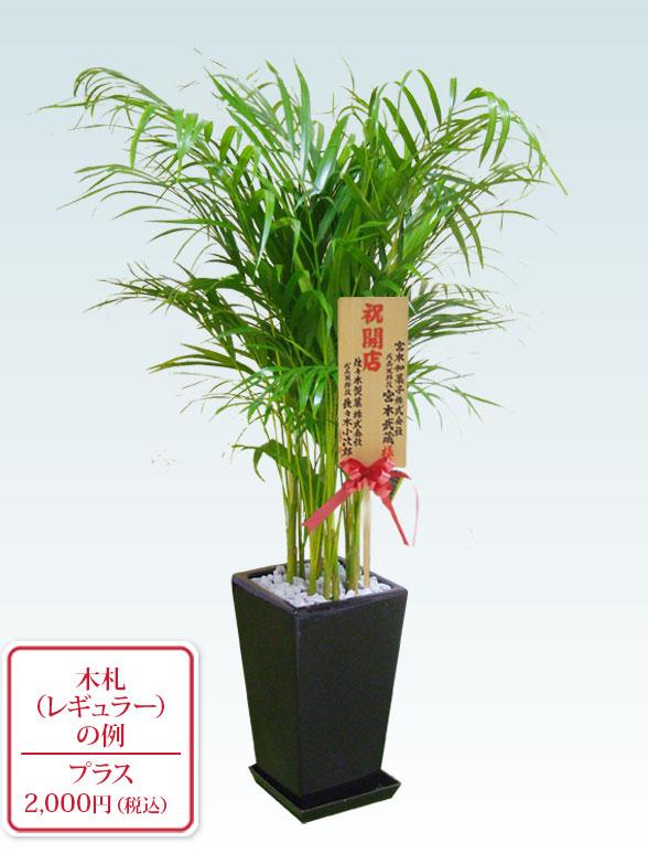 アレカヤシ(陶器鉢植込み、スクエアタイプ黒色) 9