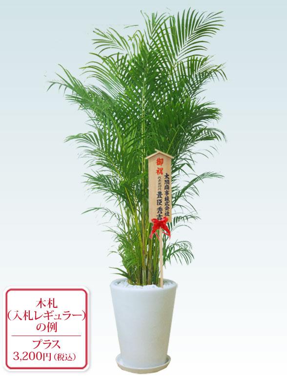アレカヤシ(陶器鉢植込み、ラウンドタイプ白色) Lサイズ 10