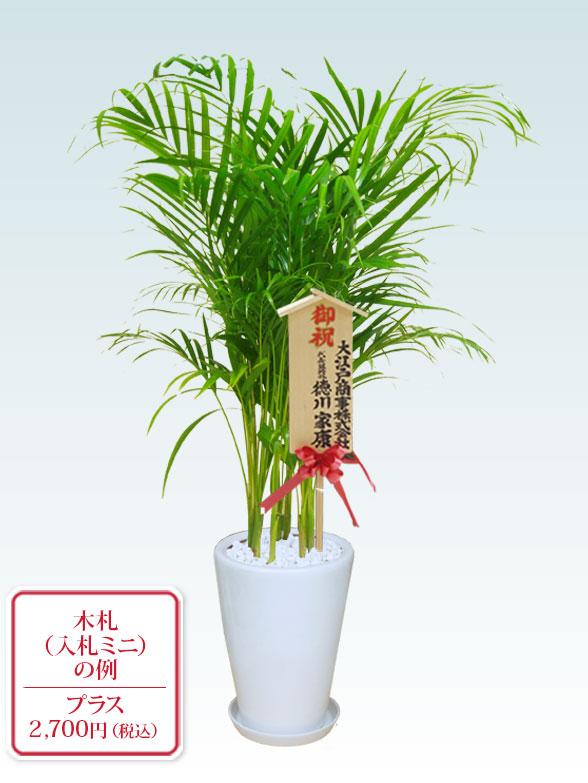 アレカヤシ(陶器鉢植込み、ラウンドタイプ白色) 10