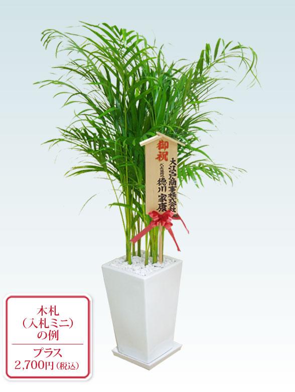 アレカヤシ(陶器鉢植込み、スクエアタイプ白色) 10