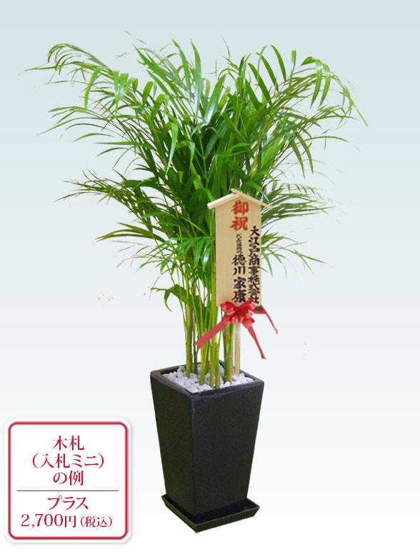 アレカヤシ(陶器鉢植込み、スクエアタイプ黒色) 10