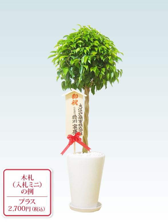 ベンジャミン(陶器鉢植込み、ラウンドタイプ白色) 8