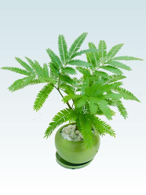 エバーフレッシュ(陶器鉢植込み、4号ラウンド緑色) 4