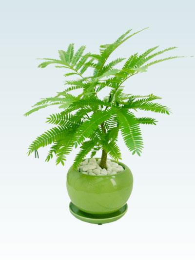 エバーフレッシュ(陶器鉢植込み、4号ラウンド緑色) 5