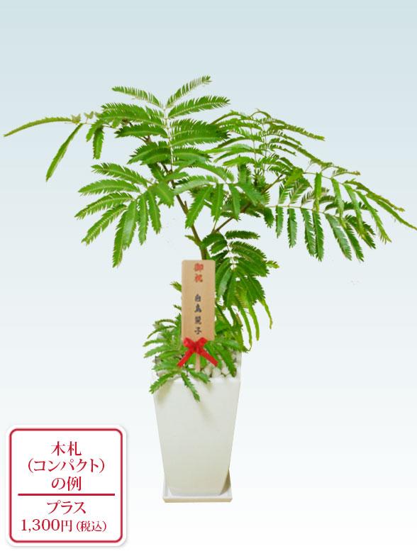 エバーフレッシュ(陶器鉢植込み、6号スクエア白色) 10