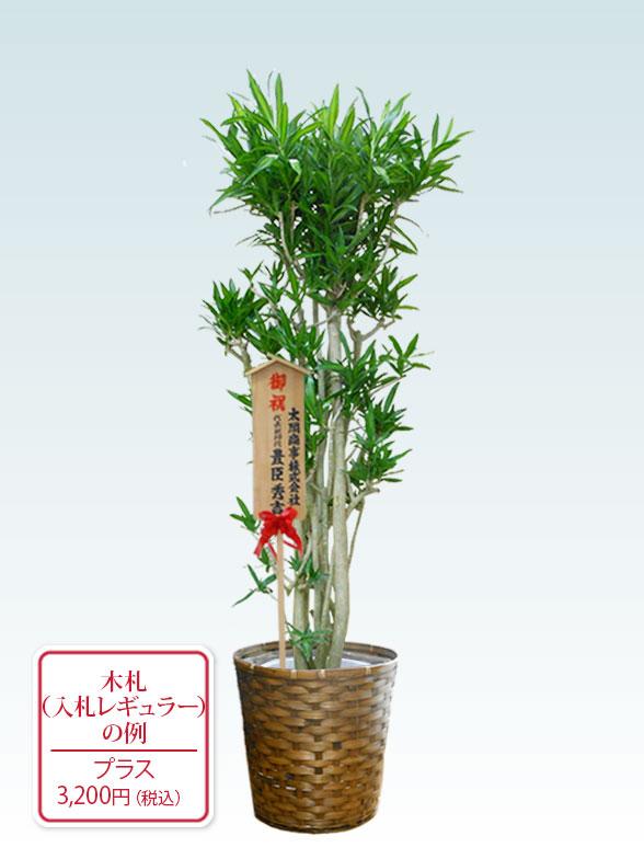 ソングオブジャマイカ 大鉢Lサイズ 藤かご付き・ダークブラウン 10