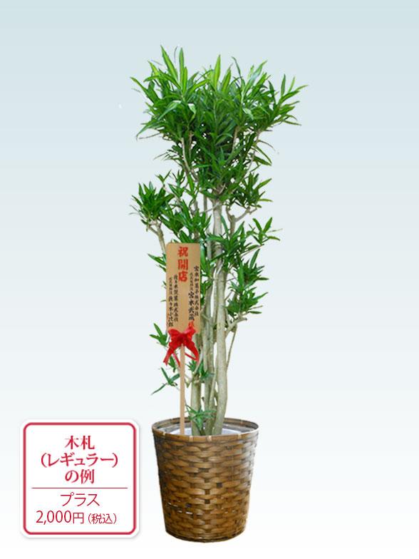 ソングオブジャマイカ 大鉢Lサイズ 藤かご付き・ダークブラウン 9