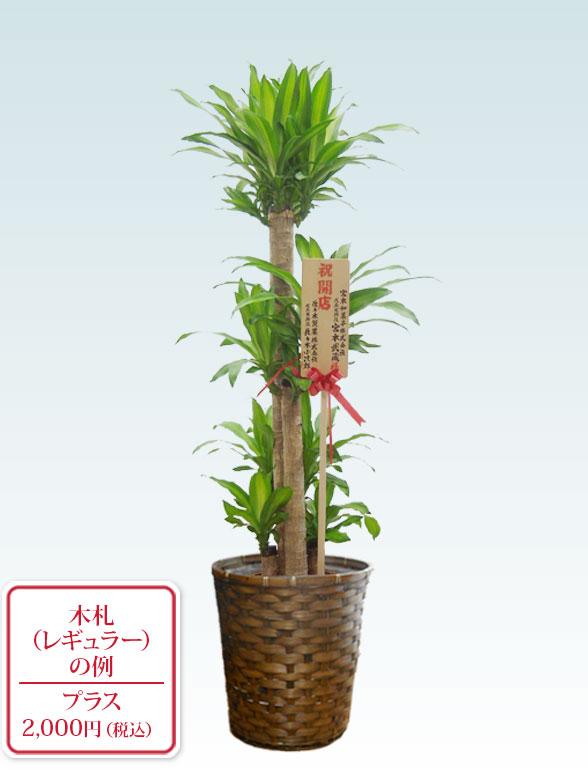 幸福の木(籐かご付、ダークブラウン色) Lサイズ 9