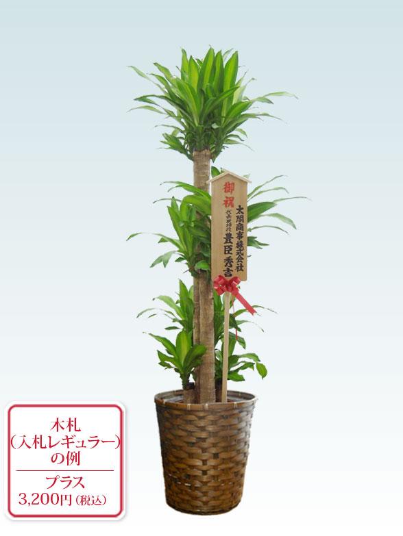 幸福の木(籐かご付、ダークブラウン色) Lサイズ