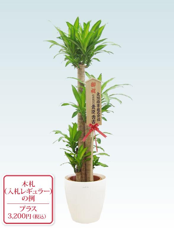 幸福の木(ラスターポット付) Lサイズ 10