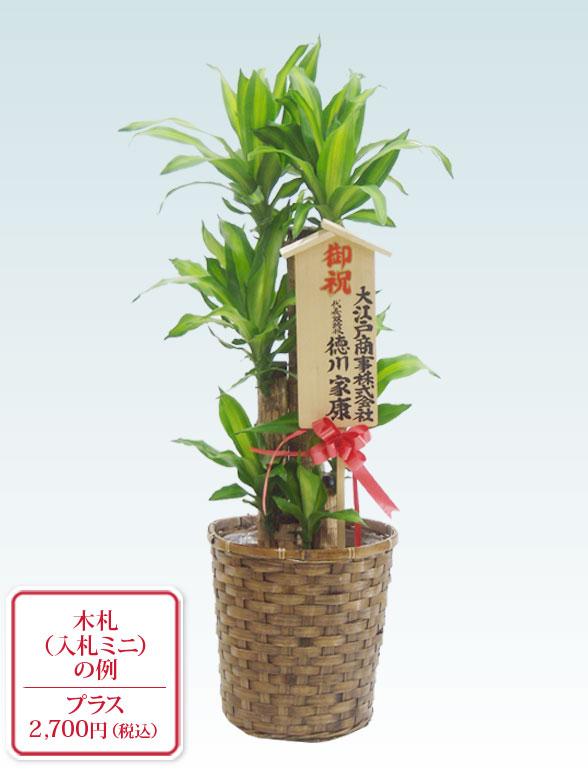 幸福の木(籐かご付、ダークブラウン色) Mサイズ 11