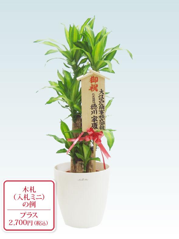 幸福の木(ラスターポット付) Mサイズ 11