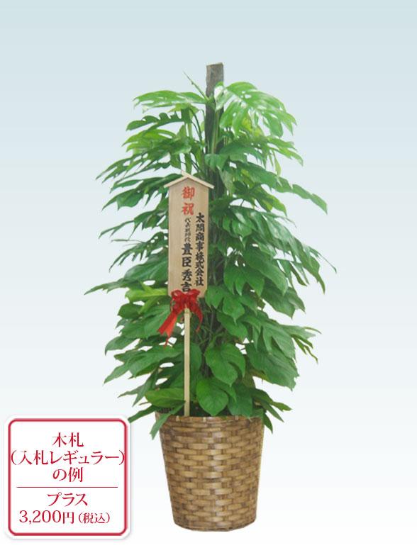 マングーカズラ(籐かご付、ダークブラウン色) Lサイズ10