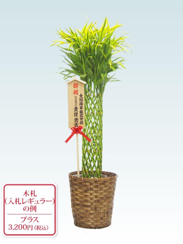 ミリオンバンブー 大鉢Lサイズ 藤かご付・ダークブラウン 10