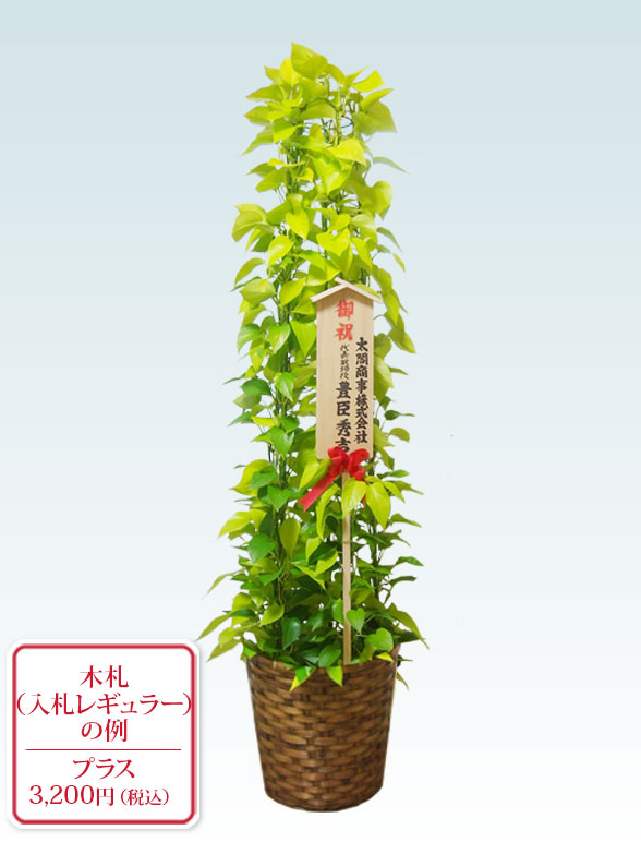 ポトスライムタワー(籐かご付、ダークブラウン色) Lサイズ 10