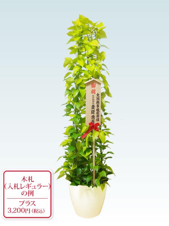 ポトスライムタワー(ラスターポット付) Lサイズ 10
