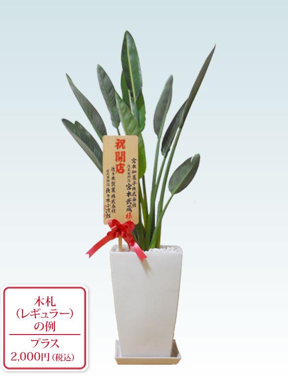 ストレリチア・レギネ8号(陶器鉢植込み、スクエアタイプ白色) 9