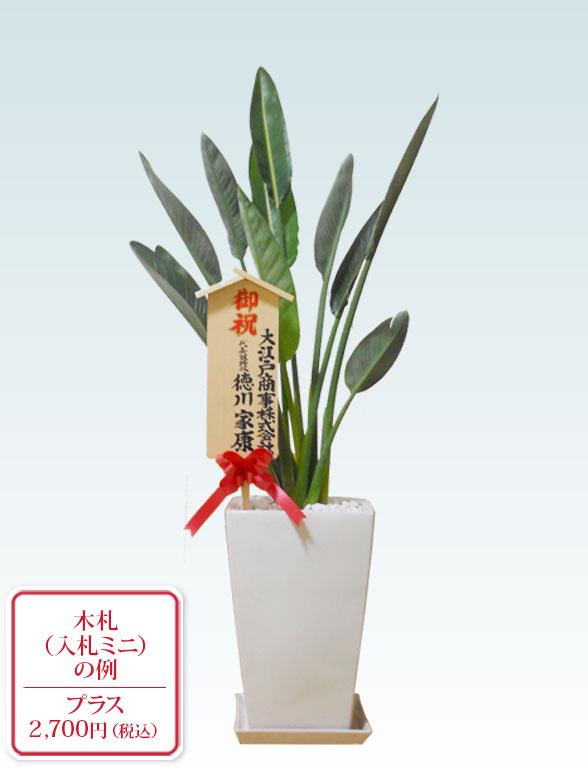 ストレリチア・レギネ8号(陶器鉢植込み、スクエアタイプ白色) 10