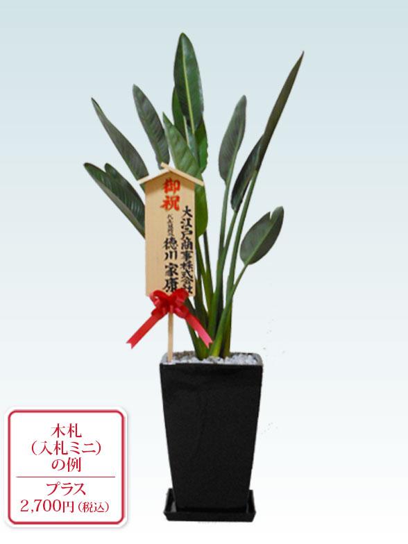 ストレリチア・レギネ8号(陶器鉢植込み、スクエアタイプ黒色) 10