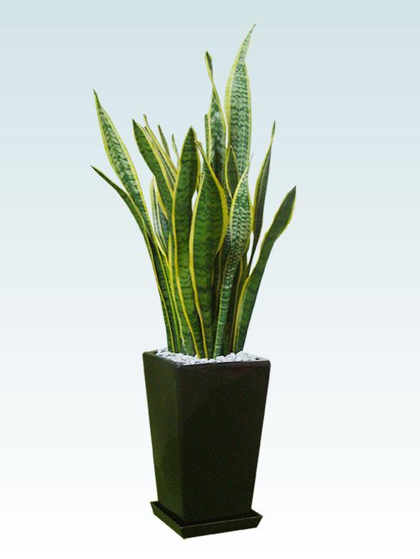 サンセベリア(陶器鉢植込み、スクエアタイプ黒色) 1